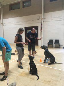 Puppy Class June 2017