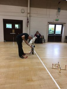 Basic Obedience Course